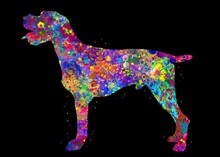 German Wirehaired Pointer Dog Watercolor, Black Background, Abstract Painting. Watercolor Illustration Rainbow, Colorful, Decoration Wall Art.