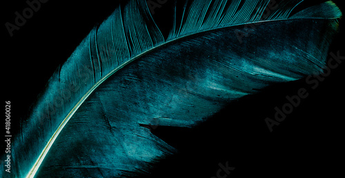 Fotografie, Tablou blue bird feather on black isolated background
