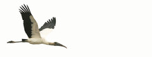 Wood Stork In Flight With Copy Space