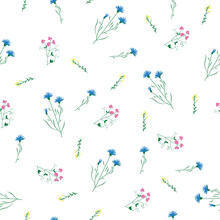 Wild Flower Sweet Pea And Knapweed Seamless Repeating Pattern With White Background. Vector Illustration
