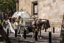 Horse Carriage In The Historic Center, Guadalajara, Jalisco, Mexico