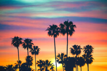 Silhouette Of Palm Trees Against Sunset Sky, California, USA