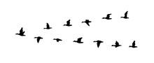 A Ducks Flying South. Vector Illustration