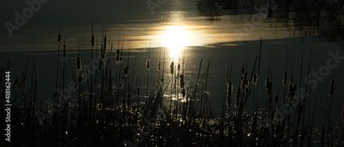 Fototapeta Wschód słońca nad jeziorem. Stawy Milickie, Dolina Baryczy, Polska. obraz