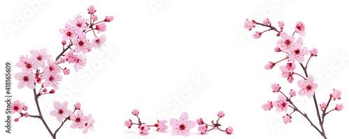 фотография Floral frame of pink cherry blossom in spring
