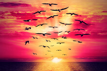 Birds Breaking The Chain Fly To Beautiful Sunrise. Seagull Free Flock Flying Over The Sea Towards The Shining Sun On Horizon. Chain Links Are Torn. Freedom Concept