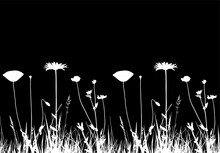 Seamless Border With Oxeye Daisy, Corn Poppy And Meadow Vetchling In Grass Isolated On Black Background