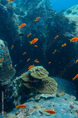 Photo Underwater Landscape