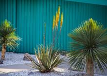 Palm Springs Neighborhood, Palm Springs, California