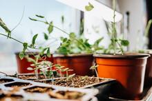 Indoor Garden Plant Starts Under Lights