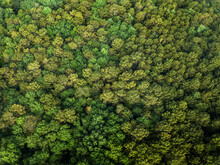 Trees From The Air