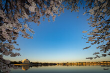 Thomas Jefferson Memorial And Cherry Blossoms