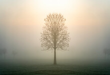 Single Lone Tree Silhouette Standing Alone In Moody Foggy Mist Field At Break Of Dawn With Ethereal Sun Light Rays Shining Down From Above Giving Mystical Hopeful Misty Scene