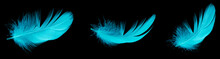 Blue Duck Feather On Black Isolated Background