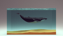 Humpback Whale In A Water Block And Sandy Seabed 3d Illustration Render