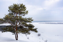 A Lone Pine Tree On A Hill Against The Background Of A Snow-covered Valley, Winter Landscape