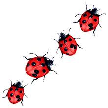 Beautiful Red Lady Bug Art Illustration