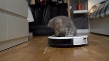 Cleaning Theme, Smart Technology And Pets. Automatic Robot Vacuum Cleaner Cleans The Room, While Gray Scotch Kitten Is Played At Home. Cat On Robotic Vacuum Cleaner In House. Home Automatic Cleaning