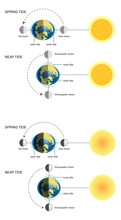 Vector Illustration Of Spring Tide And Neap Tide (diagram):2 Different Versions