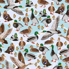 Seamless Pattern With Mallard Ducks. Male, Female And Ducklings Of The Mallard Duck Anas Platyrhynchos. Realistic Vector Illustration Of Wild Birds Of Europe, America And North Africa.