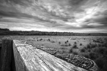 Old Rustic Wooden Fence, Forest And Gloomy Sky In Grayscale