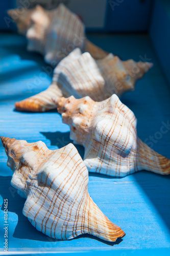 Photo Souvenir shells for sale at Robbie's of Islamorada in the Florida Keys