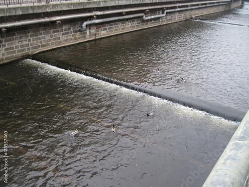 Valokuva Scenic urban view of canal with swimming wild ducks