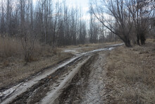 Dirt Road In Forest Early Spring. Tracks In Rut From Stuck Car