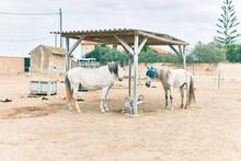 Adorable Horses At The Farm
