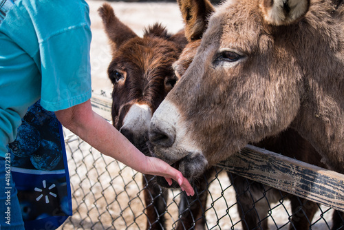 Fotografija Feeding Donkeys