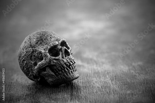 Fotografiet Old skull in black and white