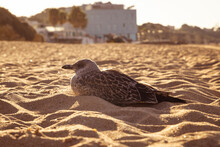Seagull Sit In Sand On Beach At Coastline In The Morning Sun And Enjoy Summer