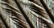 Bird Feather At High Magnification Under The Microscope 100x