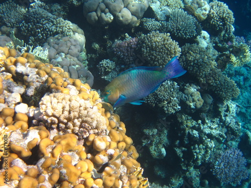 Fototapety, obrazy: red sea, corals, fish, natural light, background, texture, bright colors, coral reef close-up, underwater coral reef, ocean nature close-up