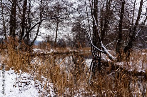 Dolina rzeki Supraśl, Podlasie, Polska  - fototapety na wymiar