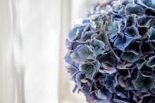 Sprig Of Blue Hydrangea, Beautiful Flower