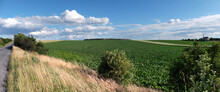 Agricultural Fields On Hills By The Road In Bohemia, Czesh Republic. Panoramic Image Taken By The Road On A Bright Day With Blue Sky And Clouds. Wild Cereal Plants On Roadside.