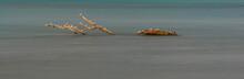 Uccelli Nel Mare Del Parco Della Maremma - Alberese