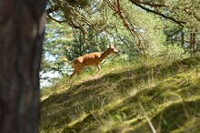 Photo Of A Wild Deer
