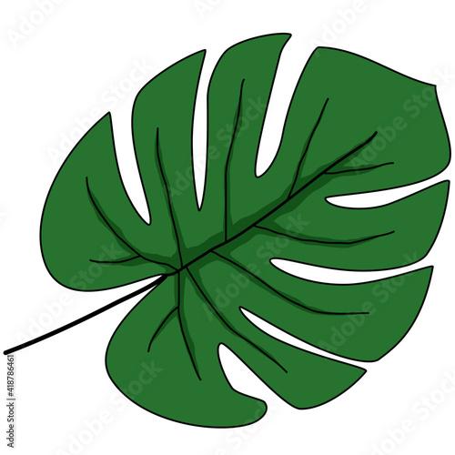 Zielony liść monstery z wcięciami - fototapety na wymiar