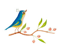 This Is A Watercolor Illustration Of A Bird Sitting On A Branch And Singing. There Are Berries And Spring Leaves On The Branch. The Image Is Isolated From The Background.
