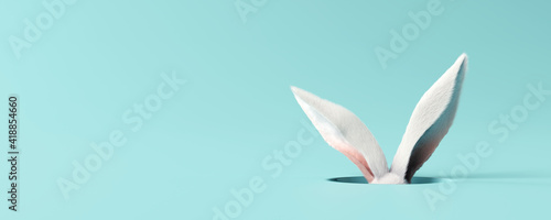 Fotografia White rabbit ear on pastel blue background