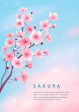 Spring Cherry Blossom Greeting Card. Vector Illustration Of Realistic Blossoming Sakura Flowers On Blue Sky Background