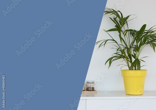 Composition of house plant image with large blue diagonal cut copy space