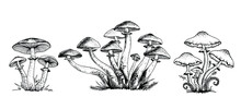 Poisonous Mushrooms Vector Illustration Drawn By Hand, Family Of Inedible Mushrooms Dangerous Mushrooms, Toadstool, Fly Agaric, White Toadstool, Family Of Mushrooms Isolated On A White Background