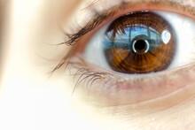 Brown Eye And Pupil  Macro Photo.