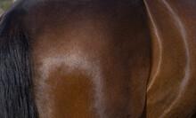 Horse Skin. Horse Coat. Hair. Horses.