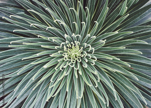 Obraz na plátně close up of a cactus
