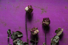 Flat Lay Art Composition Red Dry Roses On Purple Canvas Texture, Mood Board