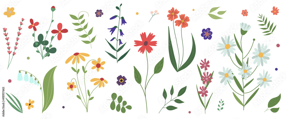 Fototapeta Collection of wild blooming meadow flowers. Flat colorful botanical vector illustration.